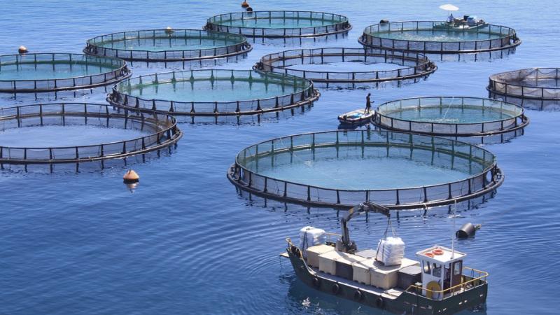 International Team of Scientists Exploring Use of Algae for Aquaculture Feedstock